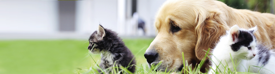 General Image - Dog Retriever with Kittens Left